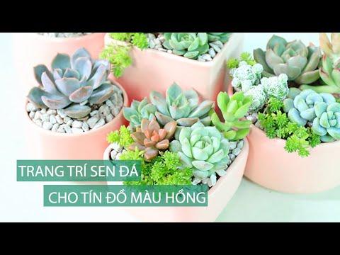 Ý tưởng trang trí sen đá cho tín đồ màu hồng  Succuclents DIY - www.vuonsenda.vn