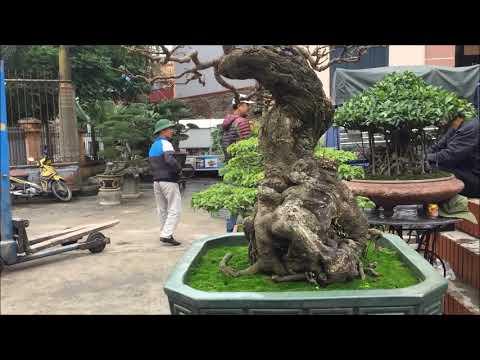 ĐTH20: Một số cây cảnh nghệ thuật của CLB Bonsai trẻ Tứ Kỳ tại Hội chợ Triển lãm cây cảnh Tân Hương.