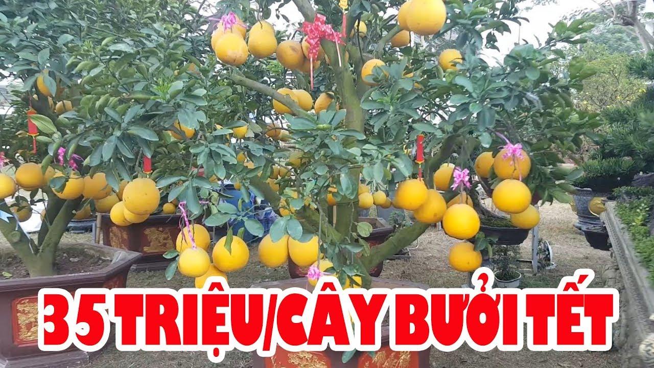 Đi chợ Hoa Tết ngắm Gái Đẹp và những chậu cây kiểng bạc tỷ ở Phú Mỹ Hưng Sài Gòn