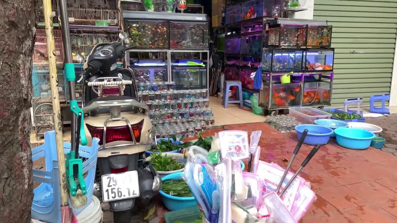 Đi mua cây thủy sinh, lũa ở làng nghề Yên Phụ và mua cá ở đường Hoàng Hoa Thám