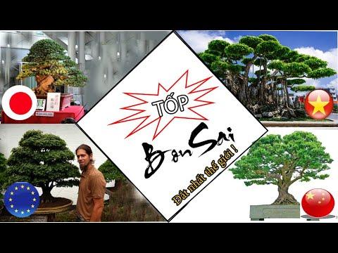 【TOP】 những cây cảnh【ĐẮT】giá nhất thế giới, Việt Nam xếp thứ mấy?