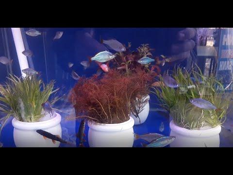 [139] Cây thủy sinh cực dễ trồng cho người mới chơi