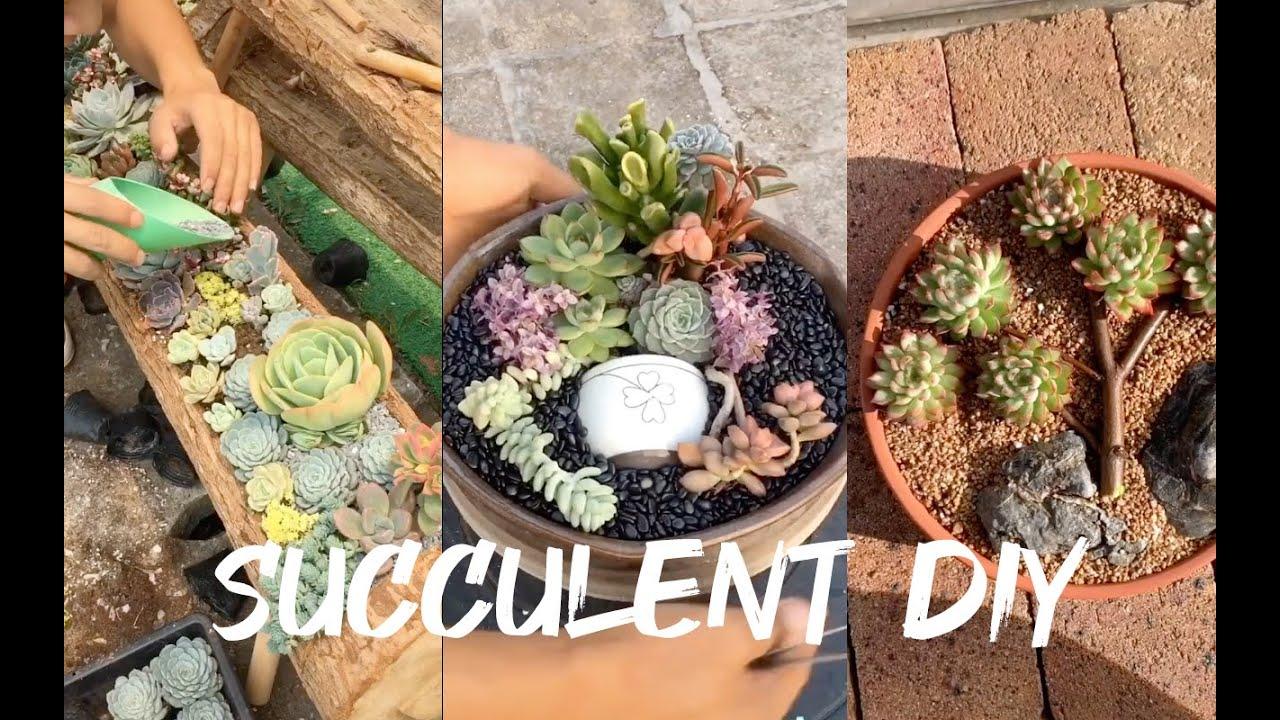 14 Succulent DIY ideas| 14 Ý tưởng trang trí sen đá tuyệt đẹp | 多肉植物| 다육이들 | Suculentas