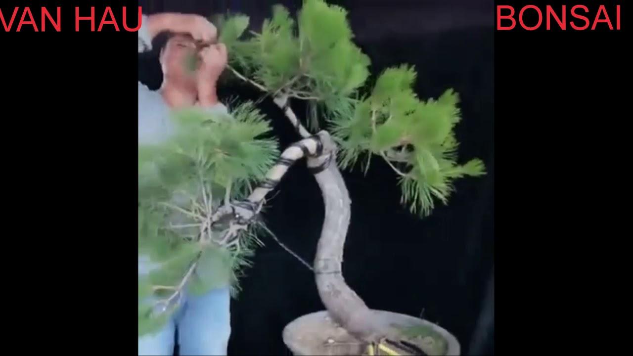 Nghệ thuật uốn cây bonsai mini của nghệ nhân trên thế giới - Art of bending mini bonsai trees part 2