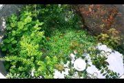 [191] HỒ THỦY SINH NGOÀI TRỜI KINH NGHIỆM + TÉP CẢNH 0969242701 CÓ SHIP outside planted fish tank