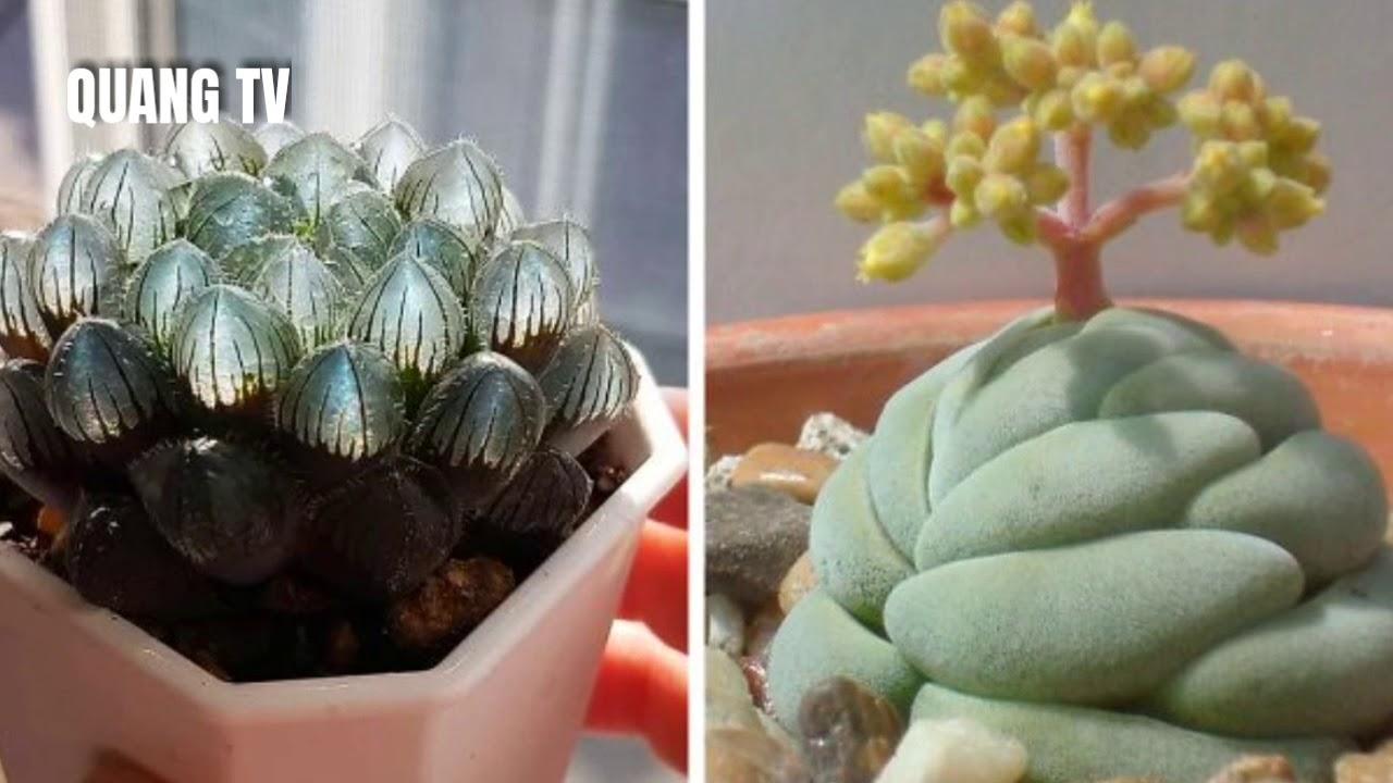 30 loại sen đá có hình ngộ nghĩnh #quangtv #senda #succulent