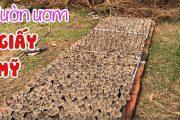 353. Vườn Uơm Giấy Mỹ (Dừng Bán Cành Hom để Giâm Cây) | CÂY CẢNH CHỢ HÀNG Hải Phòng
