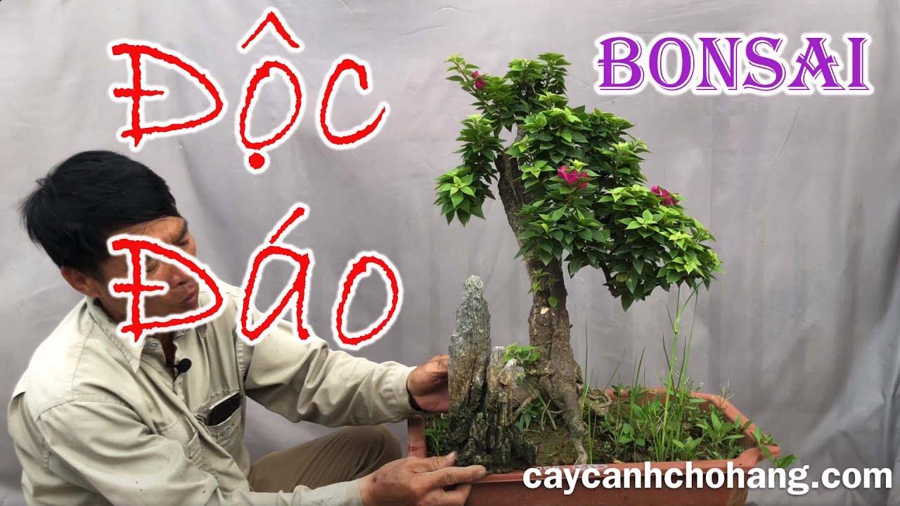 416. Một Số Tác Phẩm Bonsai Giấy Mỹ Độc Đáo |0981.0981.28| CÂY CẢNH CHỢ HÀNG Hải Phòng