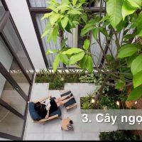 5 loại cây thường được trồng trong nhà - tiểu cảnh - giếng trời - sân vườn