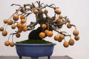 ARTISTIC BONSAI TREES part 2 - NHỮNG CÂY BONSAI NGHỆ THUẬT