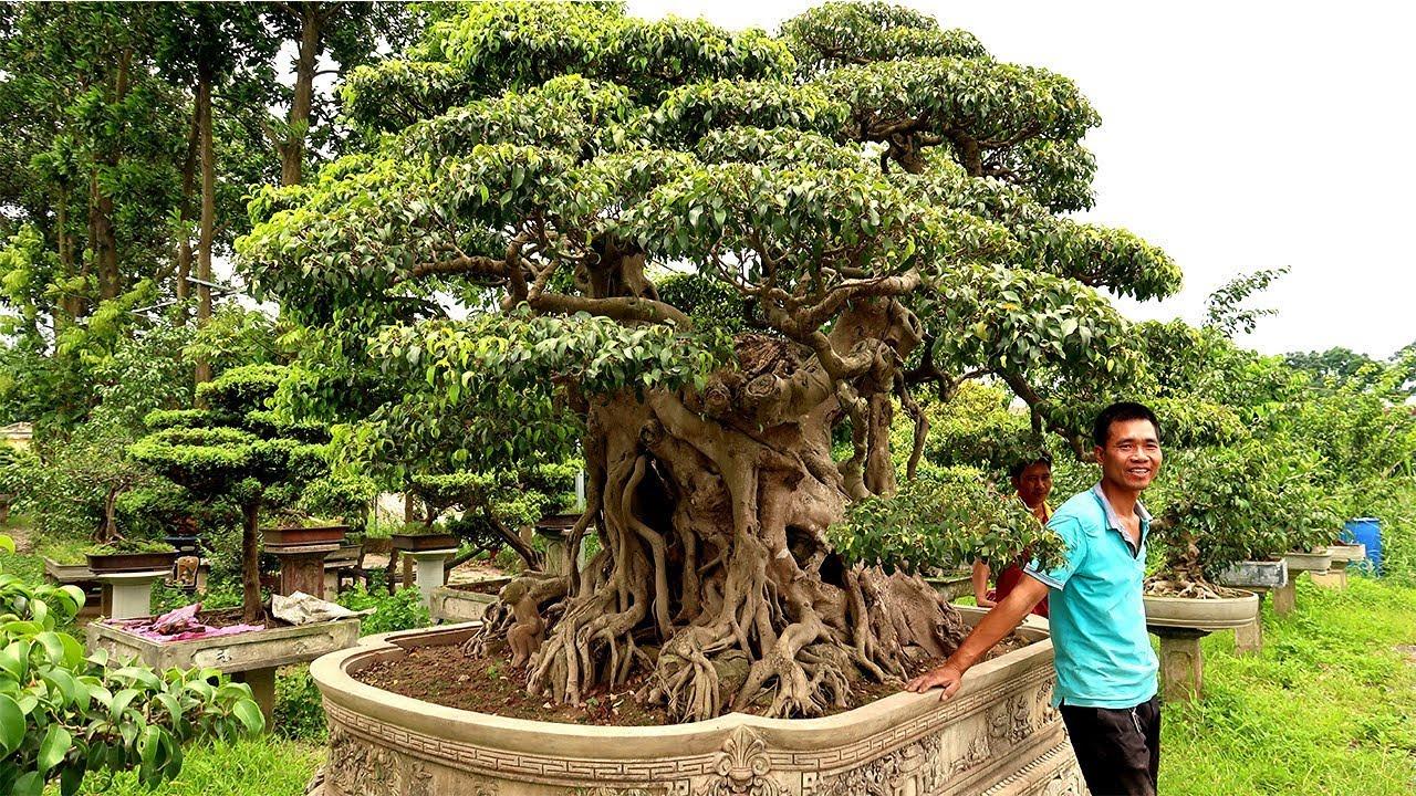 Anh em đến chơi phát hoảng với vườn cây cảnh nghệ thuật của Tuấn Anh