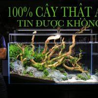 #AquaMinhLong - Setup bể 1m2 với các loại cây thủy sinh thật