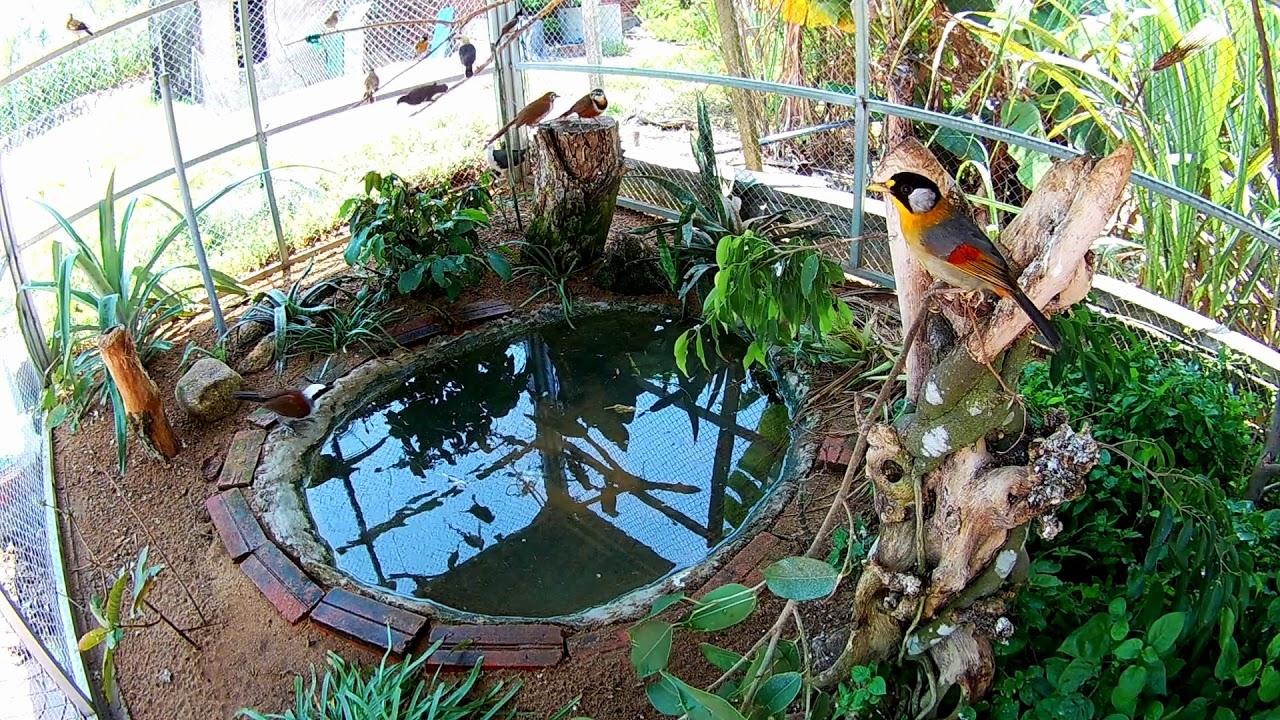 Aviary, Lồng chim ngoài trời, Một buổi chiều buồn trong Avi