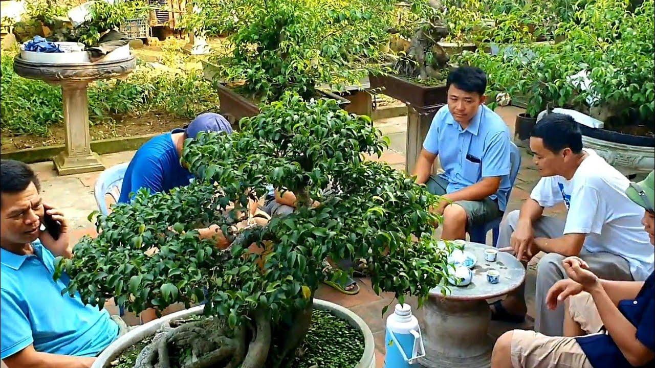 Báo giá 80 triệu cây Sanh Nam Điền có bệ rễ rất kỳ quái.