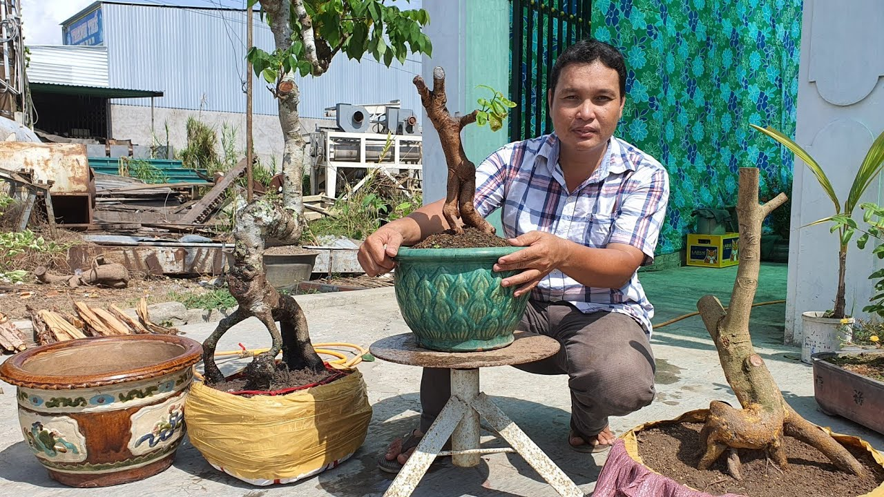 Bông Trang, Mai, Giấy Mỹ, Khế, Chậu xưa GL 11/5 ĐT 0767 216 659 Bình VL