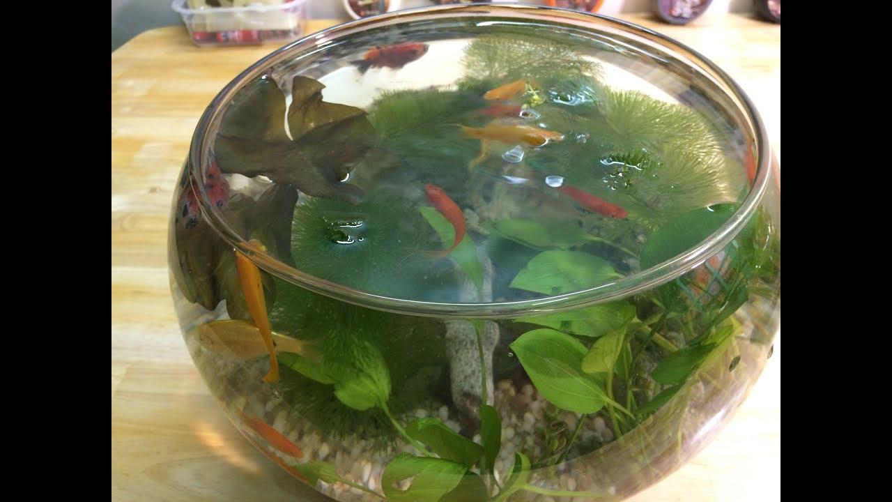 Bể Cá Cảnh Thủy Sinh Mini Để Bàn - Hướng Dẫn Cách Setup Bể Cá Thủy sinh