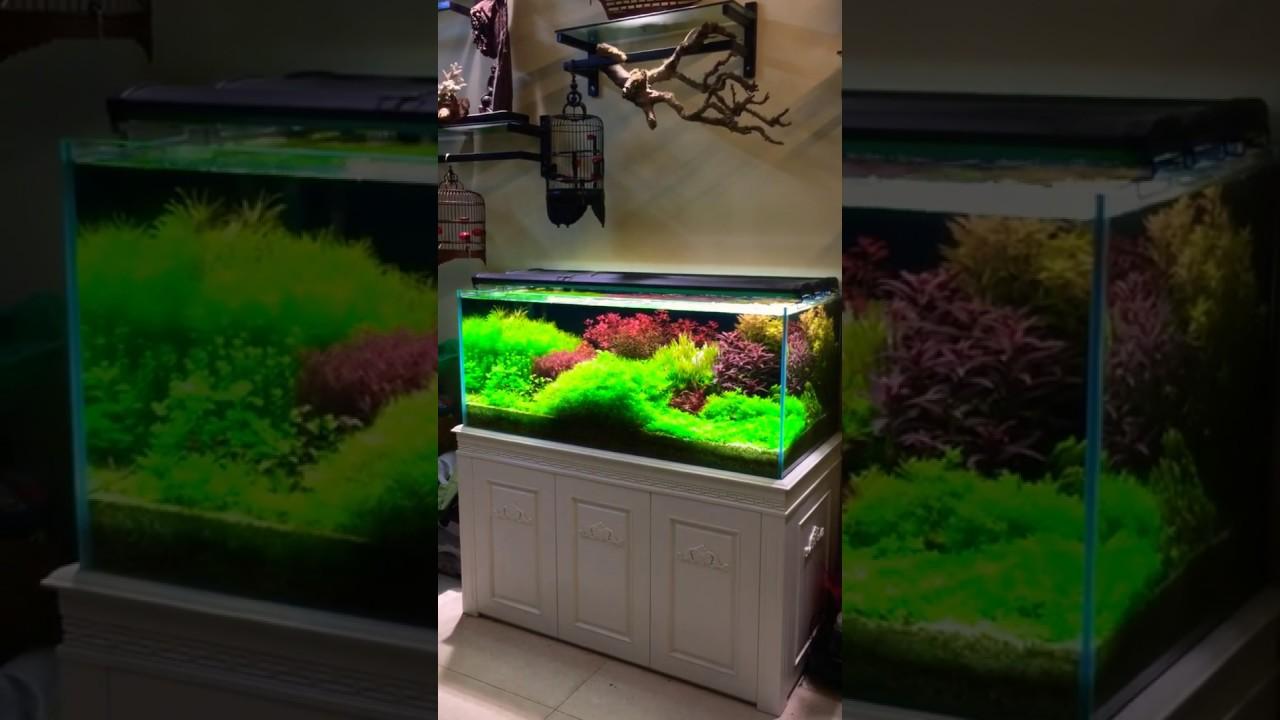 Bể cá đẹp - cây thuỷ sinh