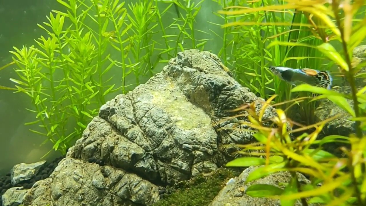 Bể thủy sinh 1 tháng tuổi, nước và cây đã ổn định