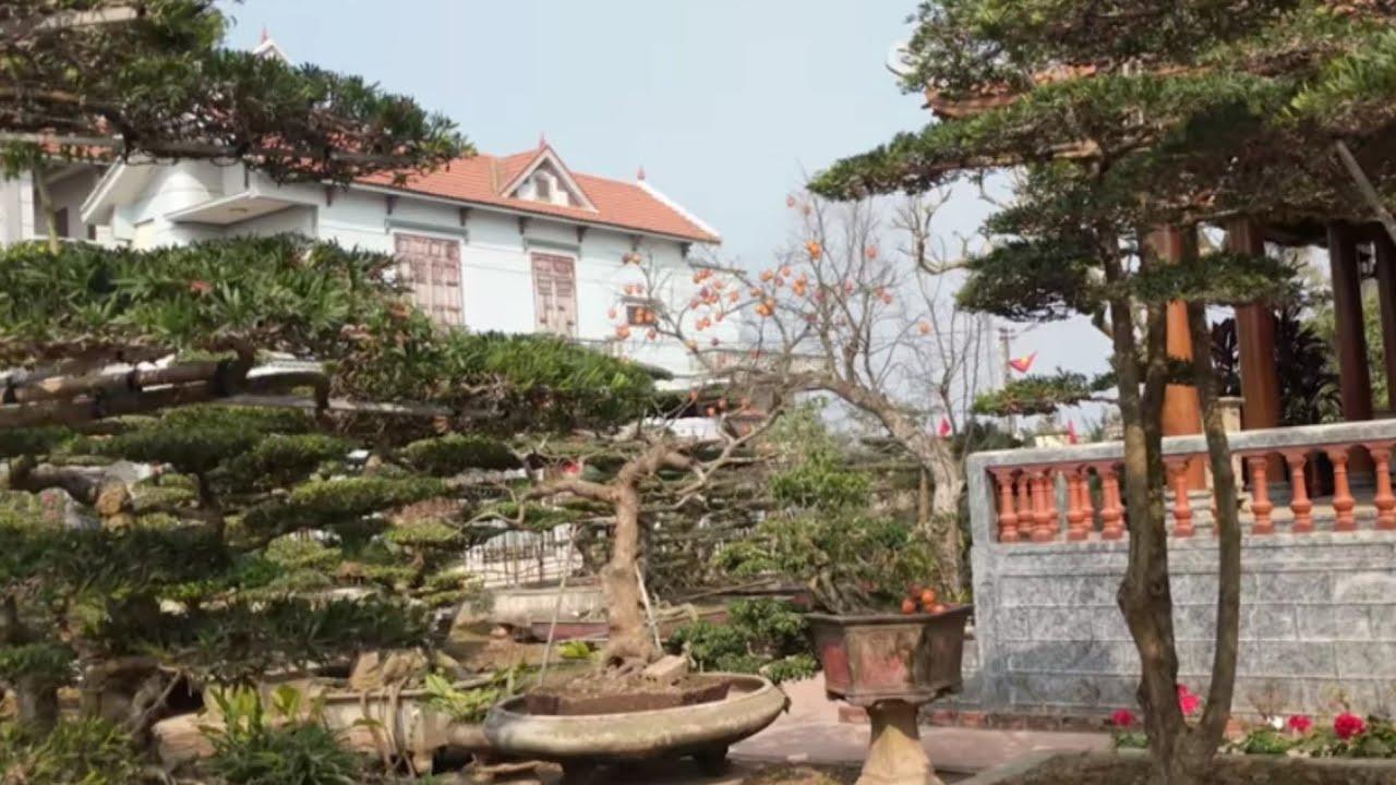 Biệt thự sân vườn có rất nhiều Hoa Hồng Cổ giá từ 1 đến 15 triệu.