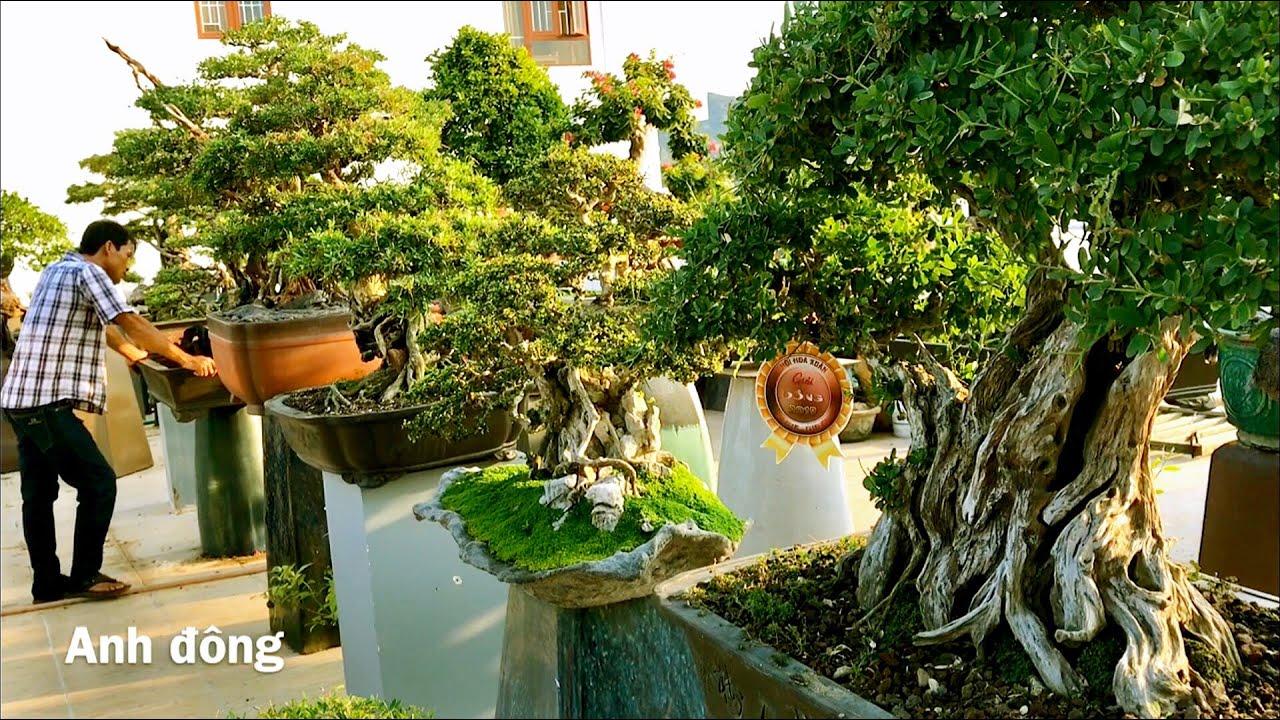 Bonsai đẹp trên sân thượng quán cafe