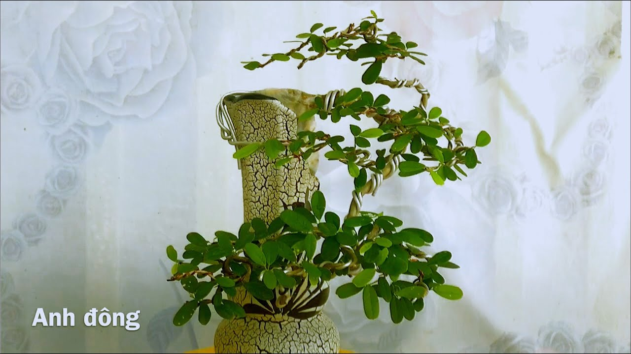 Bonsai 3 trong 1