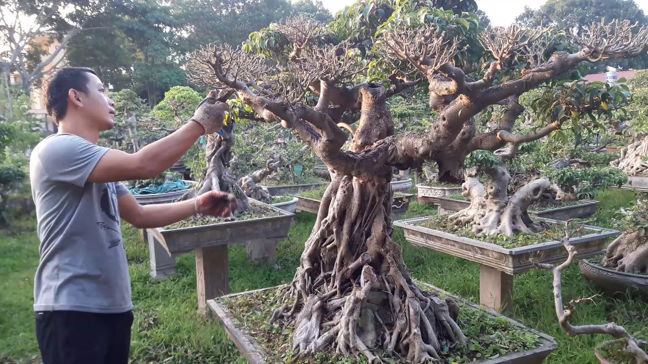 Bonsai Doãn Bình - SỐ 643 : Kỹ Thuật Cắt Tỉa Tạo Tác Cho Bonsai Việt Nam ,Báo Gía Cho AE Chơi Tết