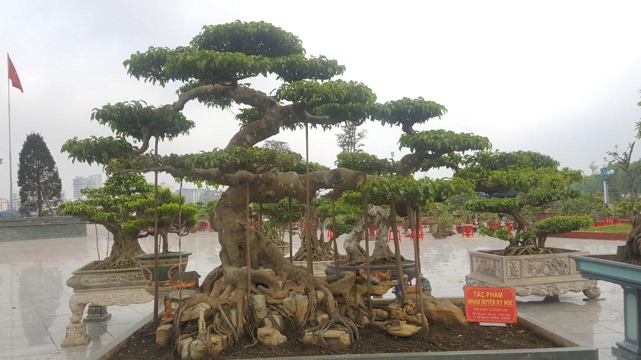Bonsai, cây cảnh nghệ thuật triển lãm 990 năm DANH XƯNG THANH HÓA năm 2019