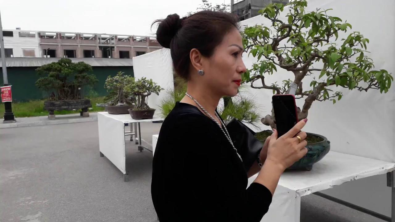 Bonsai nghệ thuật tầm trung đẹp nhất trong triển lãm Sinh vật cảnh