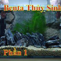 Cá Betta Thủy Sinh Không lọc, Không CO2, phần1,/ Betta Fish Sweet Potato No Filter, No CO2,
