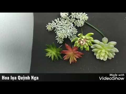 Các dòng sen đá| Sen đá decor| Hoa lụa Quỳnh Nga