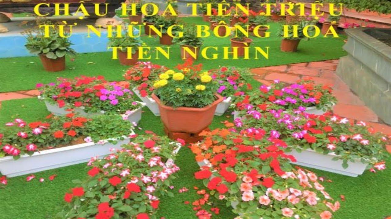Cách làm chậu hoa đẹp ngày Tết 2019 - Mr Trần TV