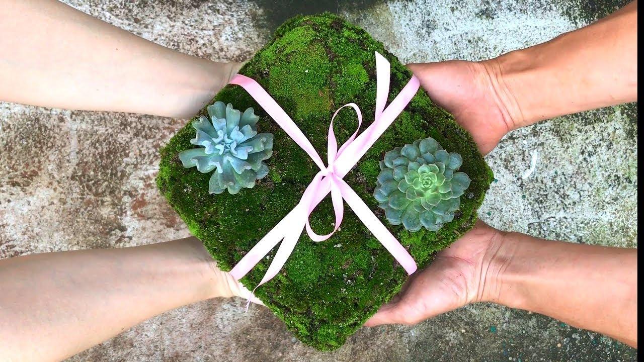 Cách trồng sen đá trên hộp quà   How to plant stone lotus on gift box   Como cultivar pedra de lótus