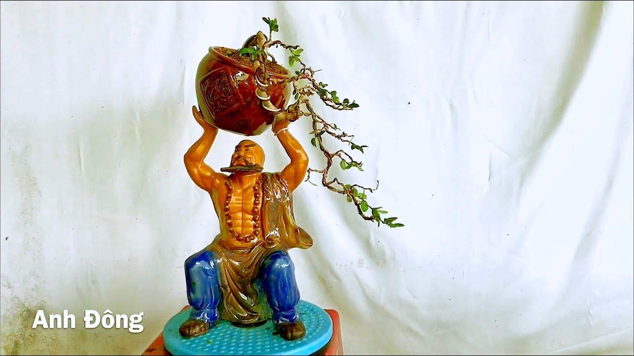 Cách uốn cây bonsai dáng đỗ kín tàng
