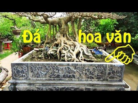 Cây đẹp tọa lạc trên chậu đá chạm khắc hoa văn tinh tế/ Beautiful bonsai