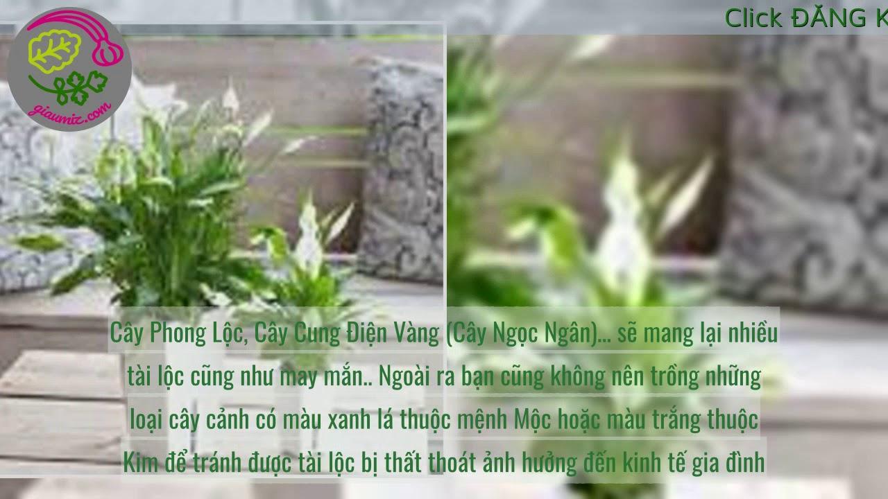 Cây Phong Thủy Hợp Tuổi Thân - Người tuổi Thân trồng cây gì để gặp nhiều may mắn?