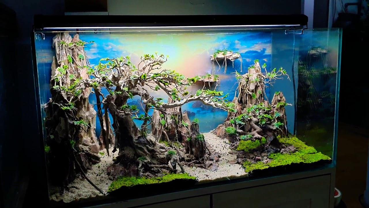 Cây bonsai đẹp khi thiết kế cho bể cá