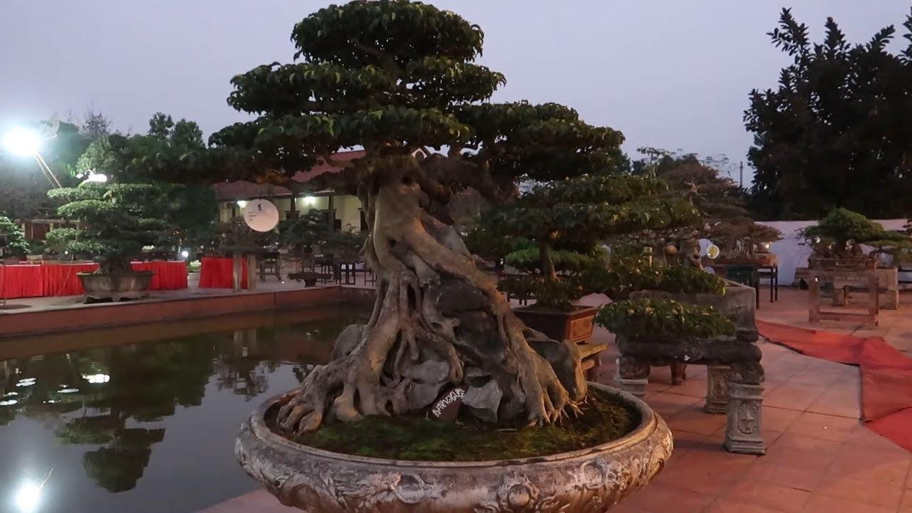 Cây cảnh đẹp nhất tại triển lãm bonsai nghệ thuật Văn Giang - Thuy garden
