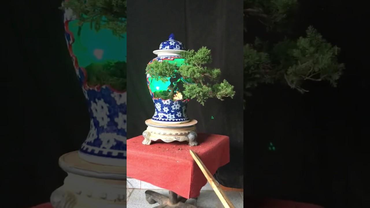 Cây cảnh Bonsai chậu đẹp cây đẹp giá rẻ