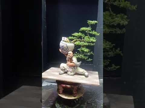 Cây cảnh Bonsai tuyệt đẹp giá hợp lý
