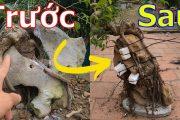 ✅Cây cảnh-bonsai-biện pháp thay thế cho cây ôm đá khi rễ cây đẩy vỡ viên đá✔️BShp