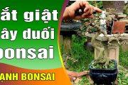 Cây duối bonsai có nét nghệ thuật nhất mà anh ấy vừa làm