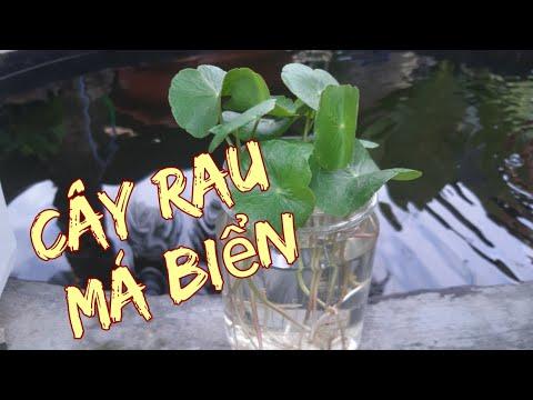 Cây thủy sinh các loại cây có thể trồng trong nước