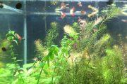 Cây thủy sinh thở như thế nào | How does aquatic plant breath?