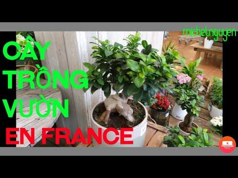? Cây trồng vườn đủ thứ có cả cây tro, tre  bán ở pháp /Michel nguyen france & cuộc sống pháp