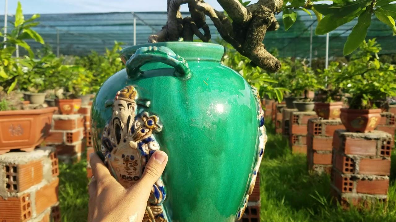 Cùng ngắm Tác phẩm mai bonsai nghệ thuật cực độc - hàng để chơi không giao lưu