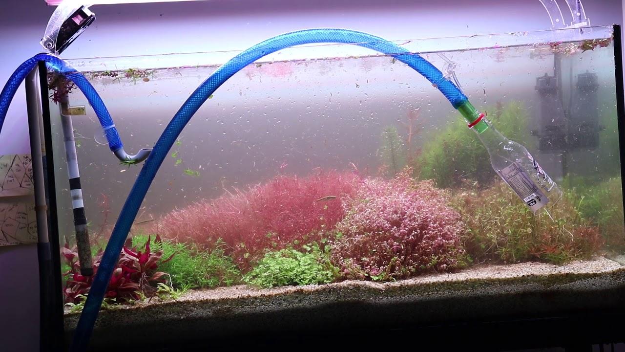 Cắt tỉa cây thủy sinh Hà Lan - Cut Dutch Aquarium