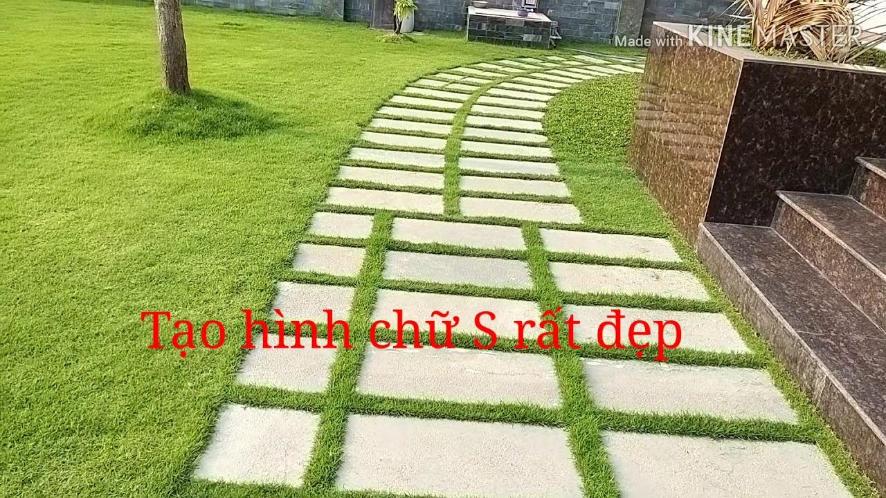 Cỏ nhung nhật trồng sân vườn lót đá lối đi hình chữ S