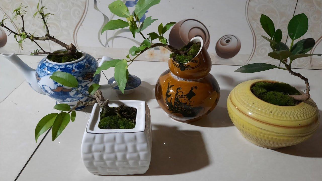 Cách khoan đồ sứ làm chậu  bonsai mini/ thịnh bonsai.