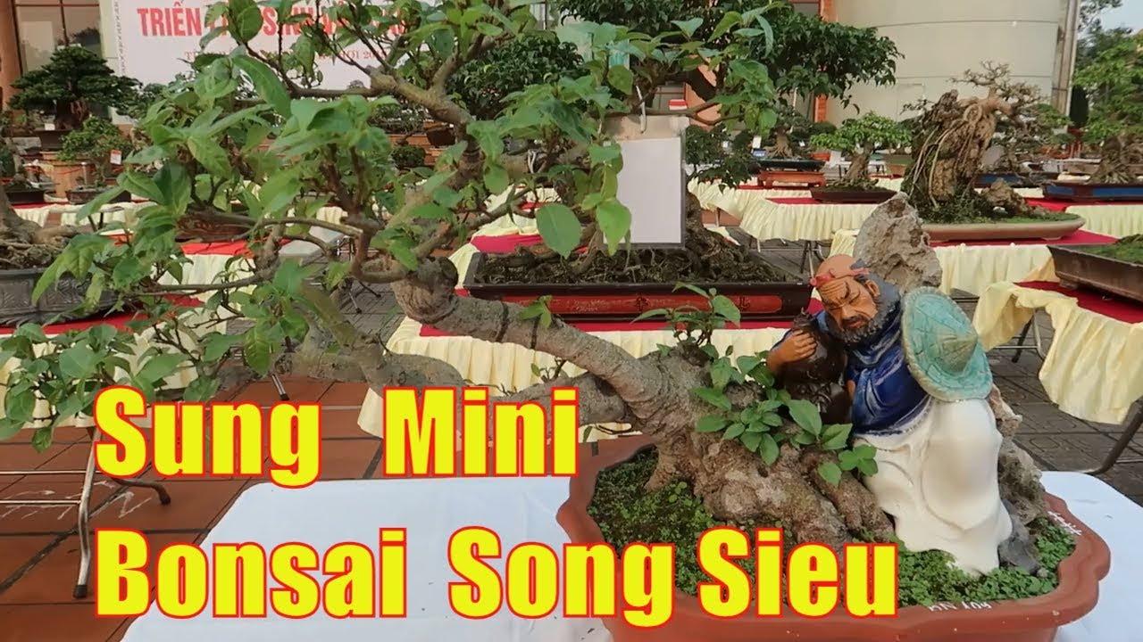 Cay Sung bonsai mini đẹp | Sung dáng song siêu triển lãm cây cảnh bắc ninh 2019 | Dang tien thuy