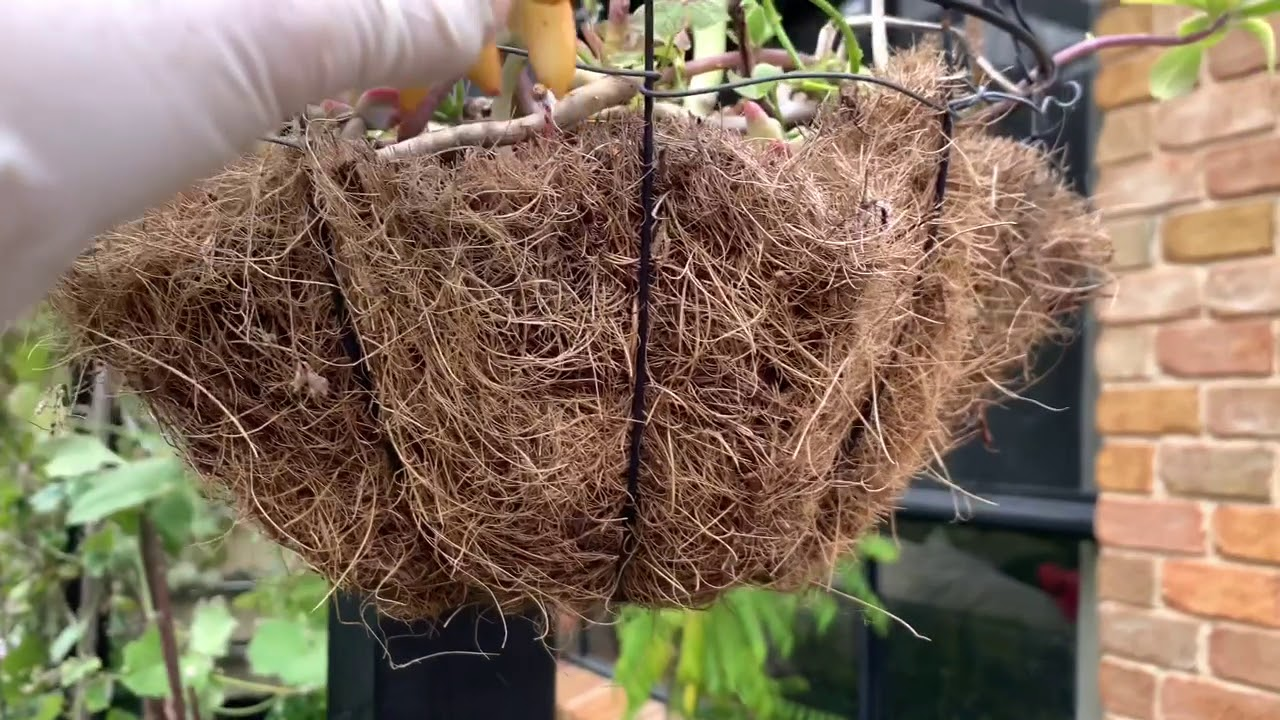 Chăm sóc và trồng sen đá cách đơn giản  Sau Nhà ở Sydney